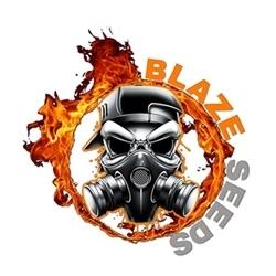 Blaze Seeds