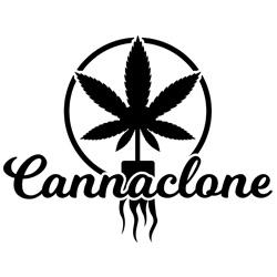 Canna Clone