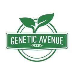 Genetic Avenue Seeds