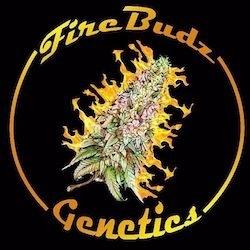 FireBudz Genetics